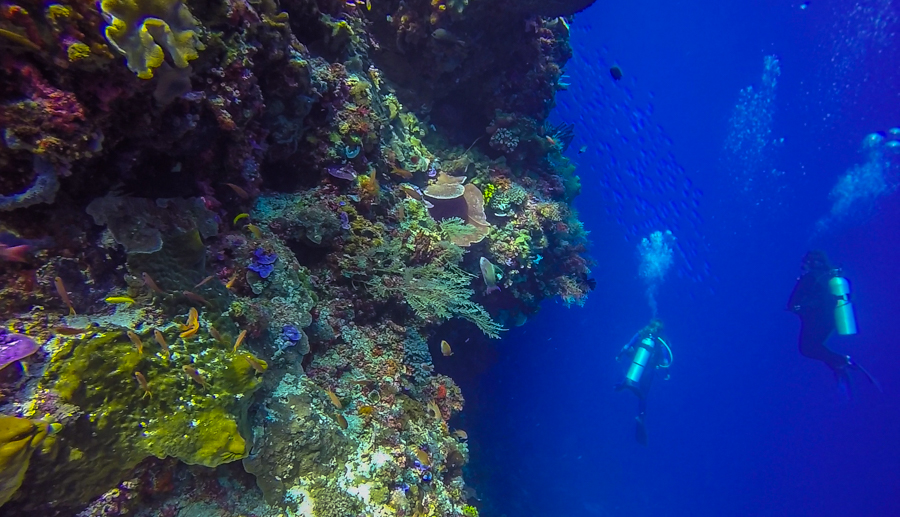 Scuba Diving in Alor indonesia choose an insurance policy that covers scuba diving