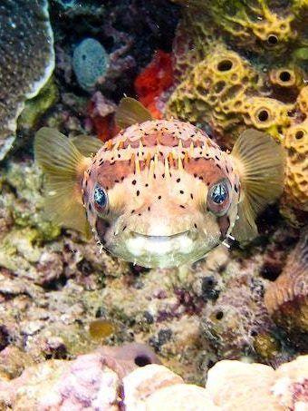 things to do in cancun dive cozumel