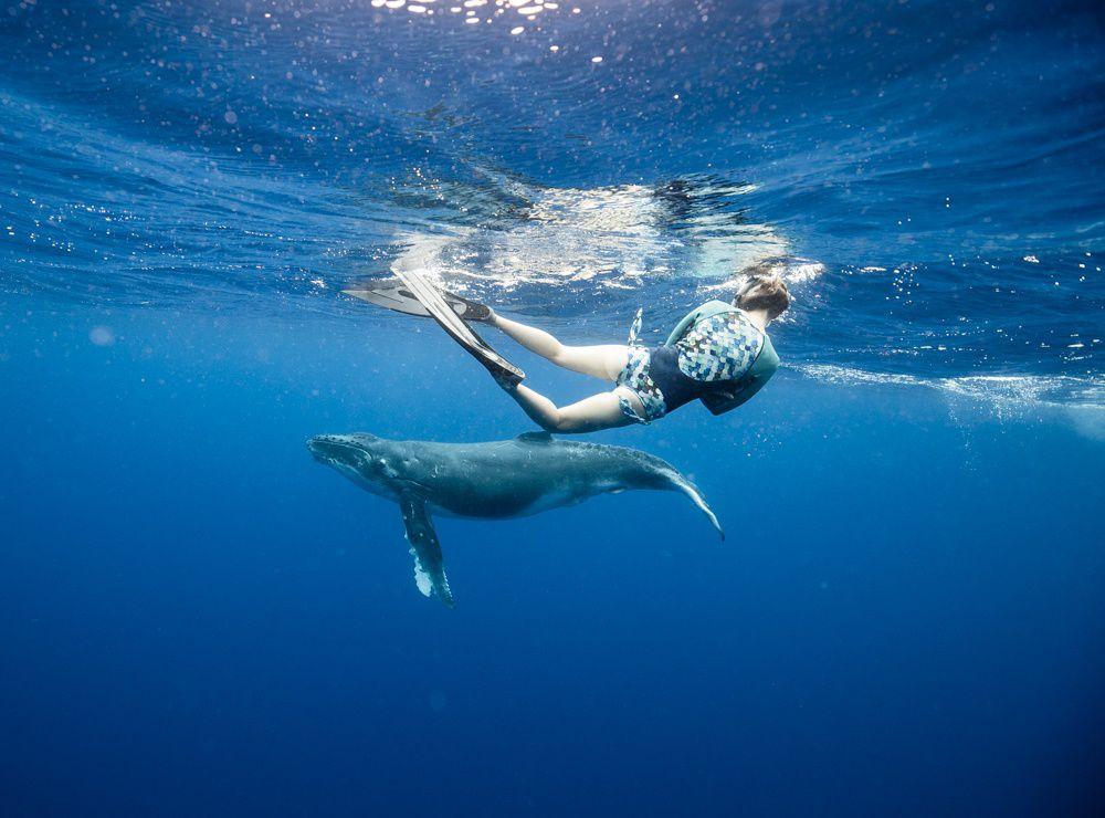 tonga whale swim