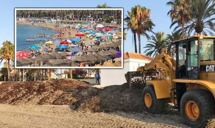 Costa del Sol holiday warning: Asian sludge brown seaweed hits coast of Spain